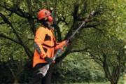Hochentaster und Baumsägen